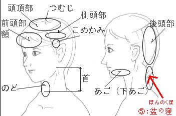 身体各部位的日语读音和详解(配...
